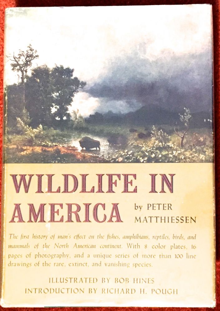 WILDLIFE IN AMERICA; Introduction by Richard H. Pough / Illustrated by Bob Hines. Peter Matthiessen.