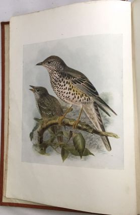 """BIRDS OF BRITAIN; with 100 Illustrations in color selected by H. E. Dresser from his """"Birds of Europe"""""""