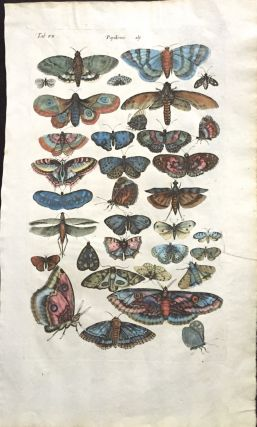 BUTTERFLIES AND MOTHS; from Historiae naturalis de insectis libri 3. Print, MERIAN, JOHNSTON