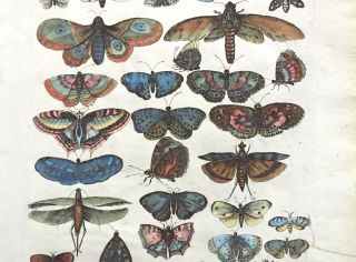 BUTTERFLIES AND MOTHS; from Historiae naturalis de insectis libri 3....
