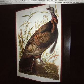 """WILD TURKEY"" from Bien facsimile ed. of Audubon's The Birds of America; Melagris Gallopavo Linn...."