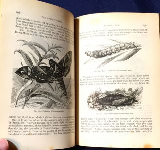 THE INSECT WORLD; and A Popular Account of the Order of Insects, / Together with a Description of the Habits and Economy of Some of the Most Interesting Species / A New Edition revised and corrected by P. Martin Duncan, F.R.S.