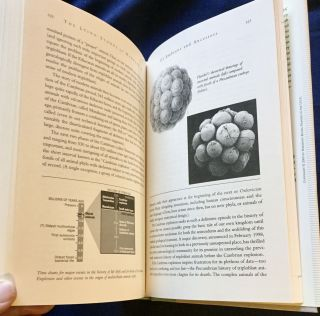 THE LYING STONES OF MARAKECH; Penultimate Reflections in Natural History / Stephen Jay Gould