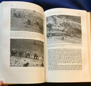 IN QUEST OF THE SACRED BABOON; A Scientist's Journey / Hans Kummer / Translated by M. Ann Biederman-Thorson