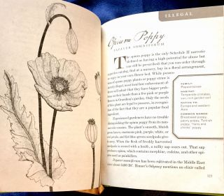 WICKED PLANTS; The Weed That Killed Lincoln's Mother & Other Botanical Atrocities / Etchings by Bright Morrow-Cribbs / Drawings by Jonathon Rosen